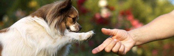 Aprende a capturar los mejores momentos de tu mascota!