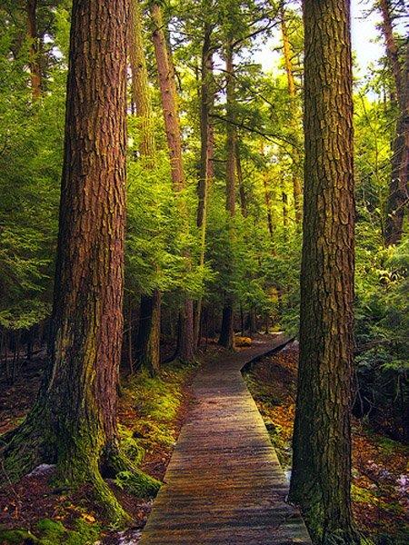 Aprende a capturar la magia de los Bosques y Selvas.
