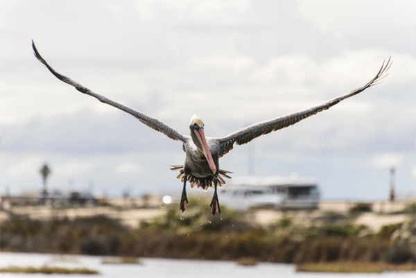 Aprende a hacer fotografía de Aves