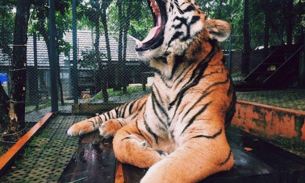 Consejos para tomar fotografías en un zoológico