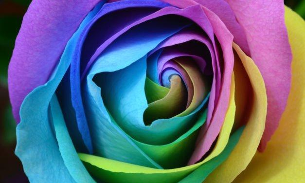 Usa el color en tus fotografías