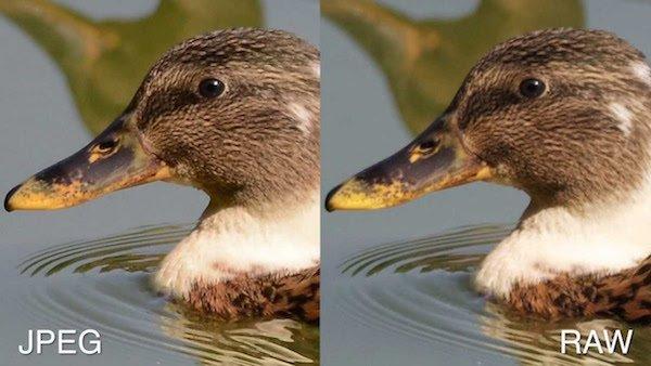 Diferentes tipos de formatos para la Fotografía