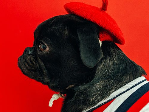 5 consejos para sesiones fotográficas de mascotas