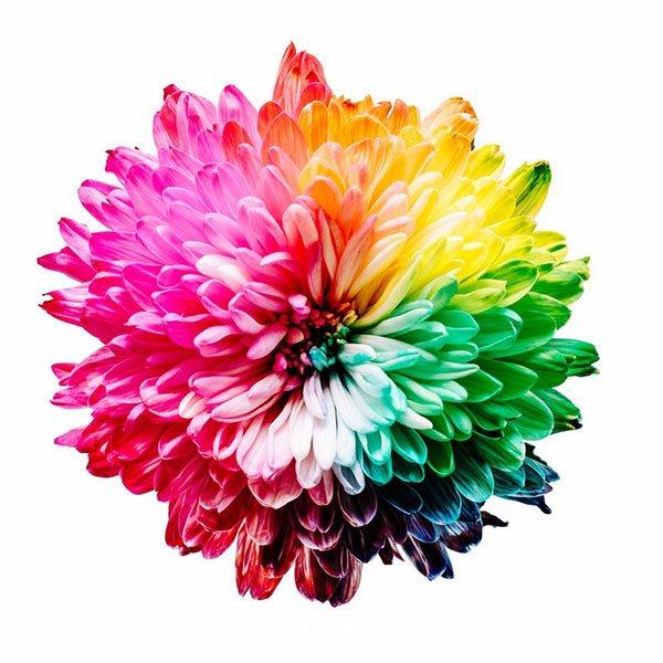 Composición y Color en la Fotografía